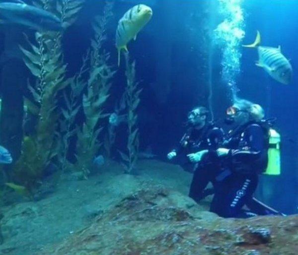 Бывшая ведущая «Ревизорро» плавала с акулами в аквариуме Дубаи
