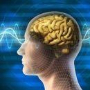 Ученые рассказали, как задержать старение мозга