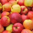 Употребление яблок снижает риск возникновения рака, - ученые