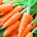 Чем полезна морковь: важные свойства для организма
