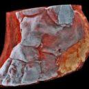 Ученые показали первые первые снимки тканей человека на цветном рентгене