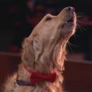 Золотистый ретривер покорил грустной песней жюри America's Got Talent