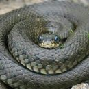 Что нужно делать при укусе змеи