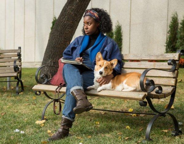 Подборка душевных фильмов о собачьей верности: Истинная преданность не имеет породы
